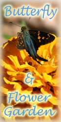See the Beautiful Butterfly and Flower Garden at Yahoo Farm